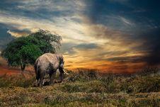 Free Wildlife, Grassland, Elephants And Mammoths, Savanna Royalty Free Stock Photo - 103417395