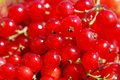 Free Red Currant Royalty Free Stock Images - 10354819