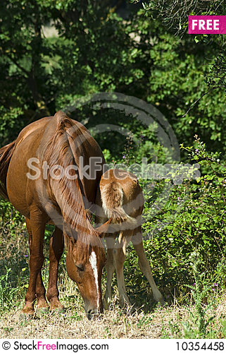 Free Mare And Colt Grazing Royalty Free Stock Photos - 10354458
