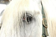 Free Eye Of The  Horse. Stock Photography - 10351462