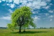 Free Lonely Tree Stock Image - 10351741