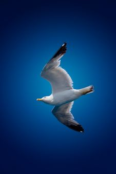 Free Seagull On Sky Royalty Free Stock Photography - 10351837