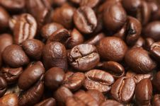Free Coffee Beans Royalty Free Stock Images - 10352499