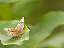Free Butterfly On A Leaf Royalty Free Stock Image - 10353846