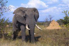 Free Elephant Stock Image - 10354471