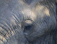 Free Elephant Royalty Free Stock Photos - 10355868