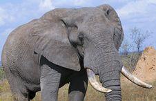 Free Elephant Stock Photography - 10355882