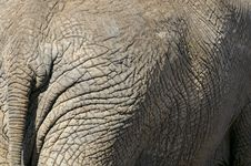 Free Elephant Royalty Free Stock Photos - 10355908