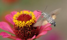 Free Butterfly On Flower Stock Images - 10356664