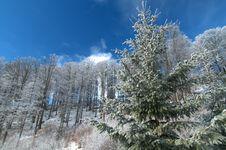 Free Winter Landscape Stock Image - 10357861