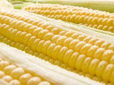 Free Corn. Royalty Free Stock Photos - 10358418