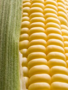 Free Corn. Stock Photos - 10358513