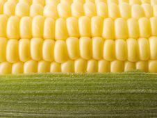 Free Corn. Stock Image - 10358561