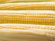Free Corn. Stock Photos - 10358623