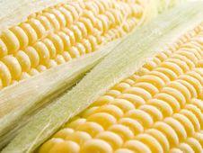 Free Corn. Royalty Free Stock Image - 10358696