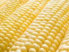Free Corn. Royalty Free Stock Photo - 10358745