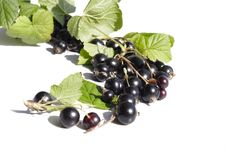 Free Black Currant Royalty Free Stock Image - 10359126