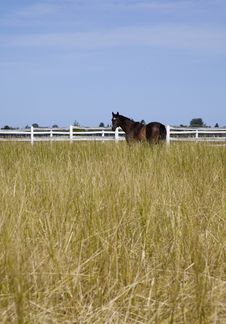 Free Horse In Hay Field Royalty Free Stock Photography - 10359387