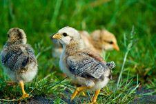 Free Wild Bird Stock Photos - 10359733