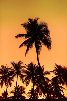 Free Sunset On The Palms Stock Photos - 103510733