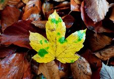 Free Leaf, Autumn, Flora, Deciduous Stock Photo - 103549240