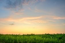 Free Sunset Above The Grass Royalty Free Stock Photos - 10360458