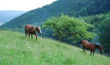 Free Horses Royalty Free Stock Photos - 10362398