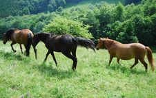 Free Horses Stock Images - 10362454