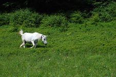 Free Horse Royalty Free Stock Image - 10362466