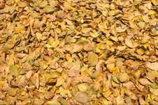 Free Fall Leaves Background Royalty Free Stock Photography - 10363127