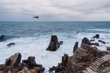 Free Avian, Beach, Birds, Clouds Stock Image - 103684161