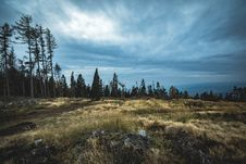 Free Cloudy, Conifer, Daylight, Environment Stock Image - 103684221