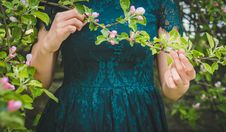 Free Woman Holding Green Leafed Plant Royalty Free Stock Image - 103684246