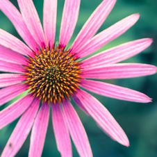 Free Beautiful, Flowers, Bloom, Blooming Stock Photography - 103823522