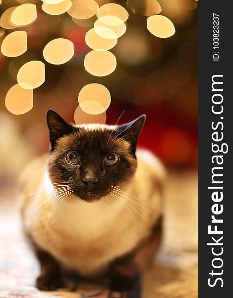 Animal, Blur, Cat, Christmas