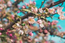 Free Selective Focus Photo Of White And Pink Petaled Flowers Royalty Free Stock Photos - 103898488