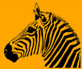 Free Zebra Stock Image - 1042801