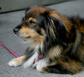 Free Nice Dog 1 Royalty Free Stock Photography - 1046437