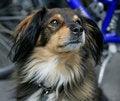 Free Nice Dog 3 Stock Photos - 1046493