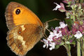Free Butterfly Royalty Free Stock Photos - 1046618