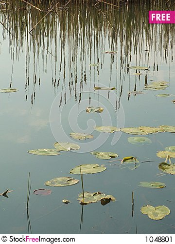 Free Cattail S Reflection Stock Image - 1048801