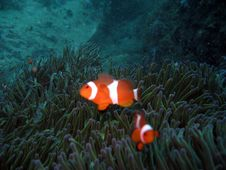 Free A Pair Of Clownfish In The Dark Stock Images - 1040314