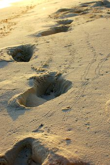 Free FOOTPRINTS ON A TROPICAL BEACH Stock Image - 1040411