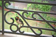 Orange Beaked Bird On Railing Royalty Free Stock Image