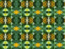 Free Green And Yellow Background Royalty Free Stock Image - 1040896