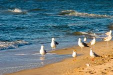 Free Seagull Stock Image - 1041881
