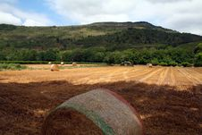 Free Hay Field After Harvest Stock Photos - 1042013