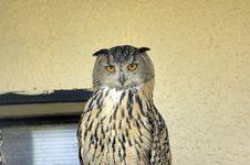 Free Owl Royalty Free Stock Image - 1043676