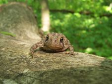 Free Toad On A Log Royalty Free Stock Image - 1043886