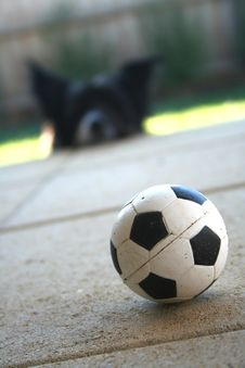 Free Molly Waiting For Ball Royalty Free Stock Photo - 1043995